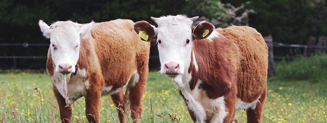 Sustainable farming practices at Essington Farm