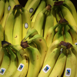 Essington Farm Bananas
